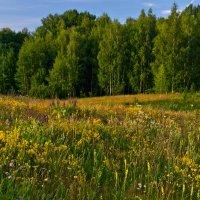 Лесные травы :: Александр Березуцкий (nevant60)