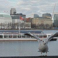 Чайка на озере Альстер :: Nina Yudicheva