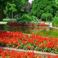 Красные цветы у воды :: Nina Yudicheva
