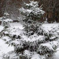 Снежный наряд. :: Марина Харченкова