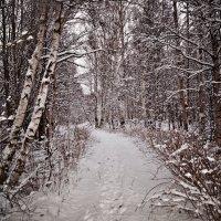 зимняя тропинка в неизвестность,оч понравилось там гулять) :: Валерия Воронова