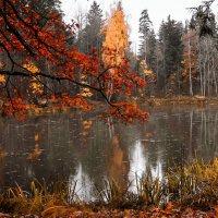 Осенний пруд :: Ириника