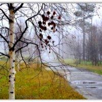 Мокрый сентябрь :: Василий Хорошев