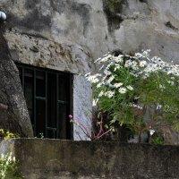 Лиссабон. Окно. Городские ромашки. :: Юрий Воронов