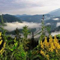 Золотая розга и туман :: Сергей Чиняев