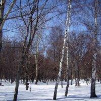 Зимний полдень :: Tarka