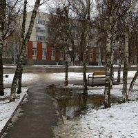 Пасмурный зимний день :: Татьяна Смоляниченко