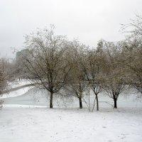 Зимой у пруда :: Анатолий Цыганок