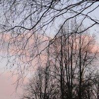 Розовые облака :: Елена Павлова (Смолова)