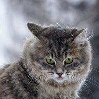 Портрет Масяни на прогулке :: Ирина Приходько