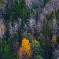 осенний лес :: Михаил Бояркин