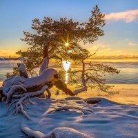 Украсить солнцем свои ветви :: Фёдор. Лашков