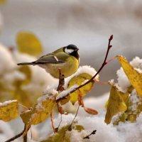 встречаем зиму :: linnud