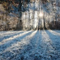 белое солнце зимы :: Elena Wymann