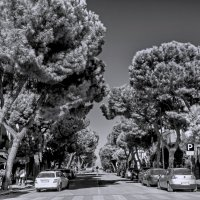 Седая хвоя. Пезаро, Италия :: Виталий Авакян