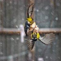 Под прицелом зимы. :: Павел Петрович Тодоров