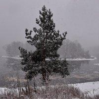 3  Декабря. Первый  настоящий  снег. :: Валера39 Василевский.