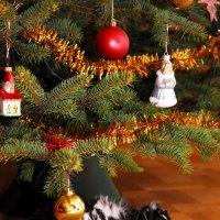 кролик ждет Нового года :: Kostas Slivskis