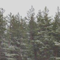 лес :: Алина Гриб