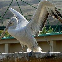 Я его попросила помахать крыльями... :: GL