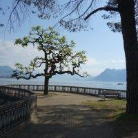 Italia, Lago Maggiore, Stresa :: Svetlana (Lucia) ***