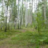 лес :: игорь белезеко