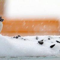 Ура, налетай, семки дают! :: Андрей Заломленков