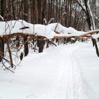 Заметает зима, заметает.. :: Андрей Заломленков