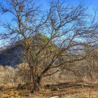 Просто дерево.. :: Игорь K.