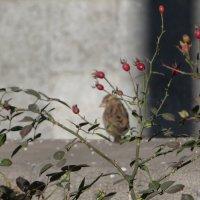 Одинокий :: Наталья Джикидзе (Берёзина)