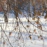 Встреча зимы и осени. :: Прима Игорь Кондратьевич