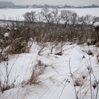Зимние травы :: Тамара Цилиакус