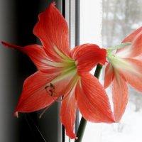 Зимнее цветение :: Valentina