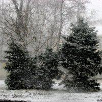Снегопад :: Нина Бутко