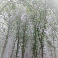 Туман :: Ирина Белая