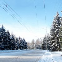 После снегопада :: super-krokus.tur ( Наталья )