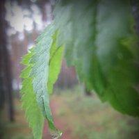 Капелька дождя :: Дария Туркова