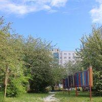 Цветение яблонь в поселении :: Наталья Золотых-Сибирская