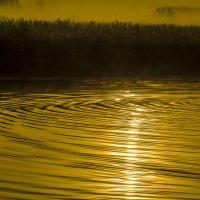 Золотистый рассвет! :: Павел Данилевский
