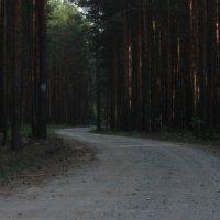 лес :: Дарья Воропаева
