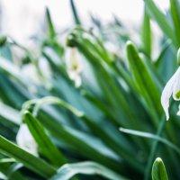 Весна :: Денис Мартынов