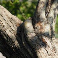 Правая рука дерева :: Сергей Михальченко