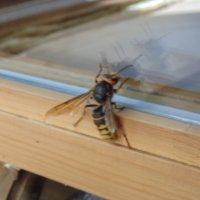 Пчела^^ :: Nazgul Musina