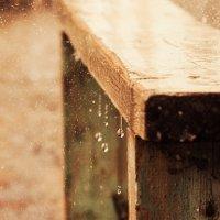 дождь :: Мария Полохина