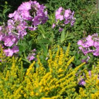 цветы :: Надежда Овсяникова