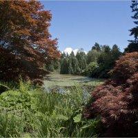 Прогулки в ботаническом саду - 4. :: Аркадий Голод