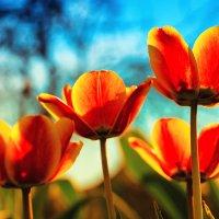Цветы на огороде :: Евгений Елисеев