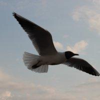 птичка :: Оксана сухарева