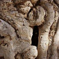 Фрагмент древнего дерева. :: Ольга Нагаева