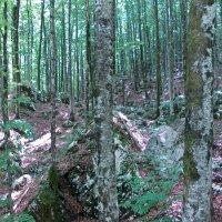 Каменные джунгли :: Светлана Игнатьева